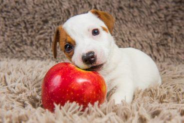 los perros pueden comer manzana