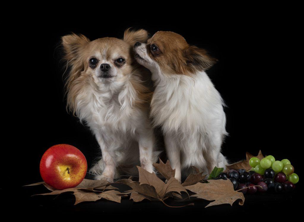 los perros pueden comer manzana sin semillas