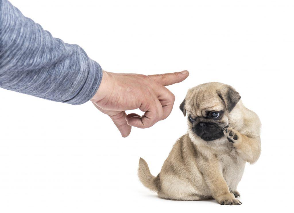no hay que repetir mucho la orden al adiestrar a un perro
