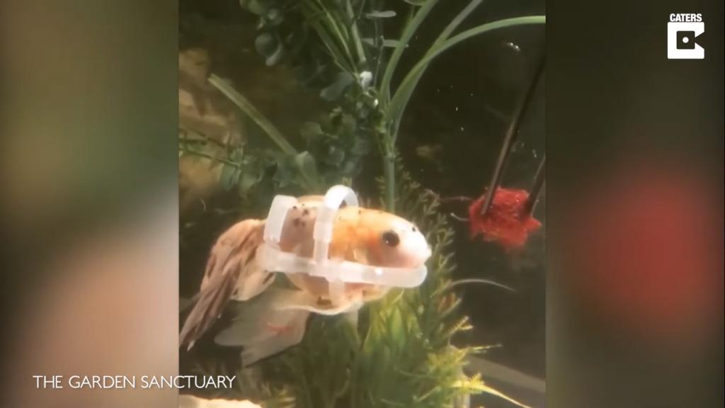 pez con flotador