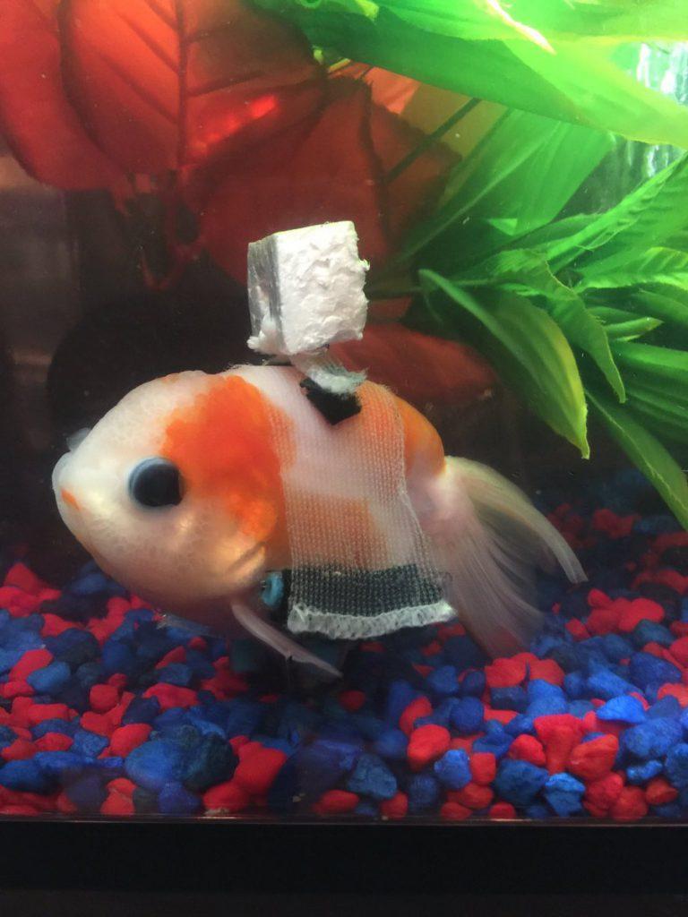 pez con flotador de corcho