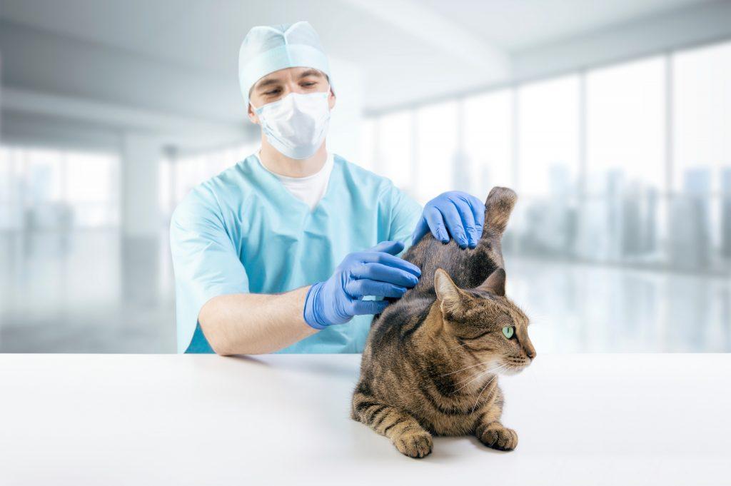 señales o síntomas de un gato enfermo