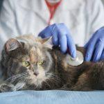 síntomas de un gato enfermo