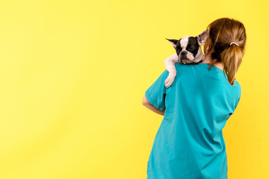 tips para elegir a un buen veterinario