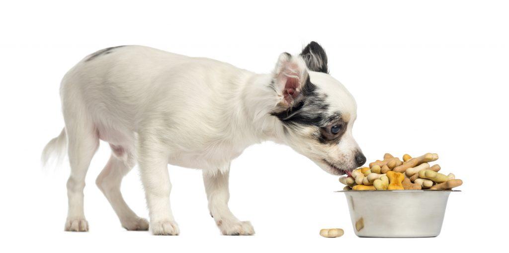 usar mal los premios es uno de los errores al adiestrar a un perro