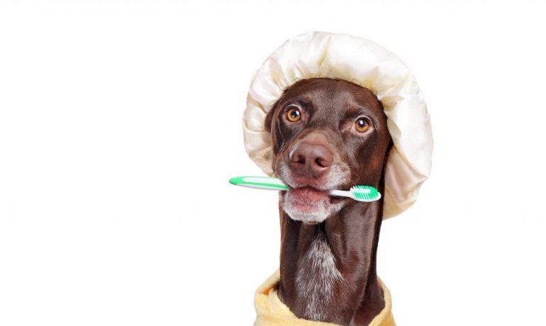 cómo hacer pasta dental casera para perros