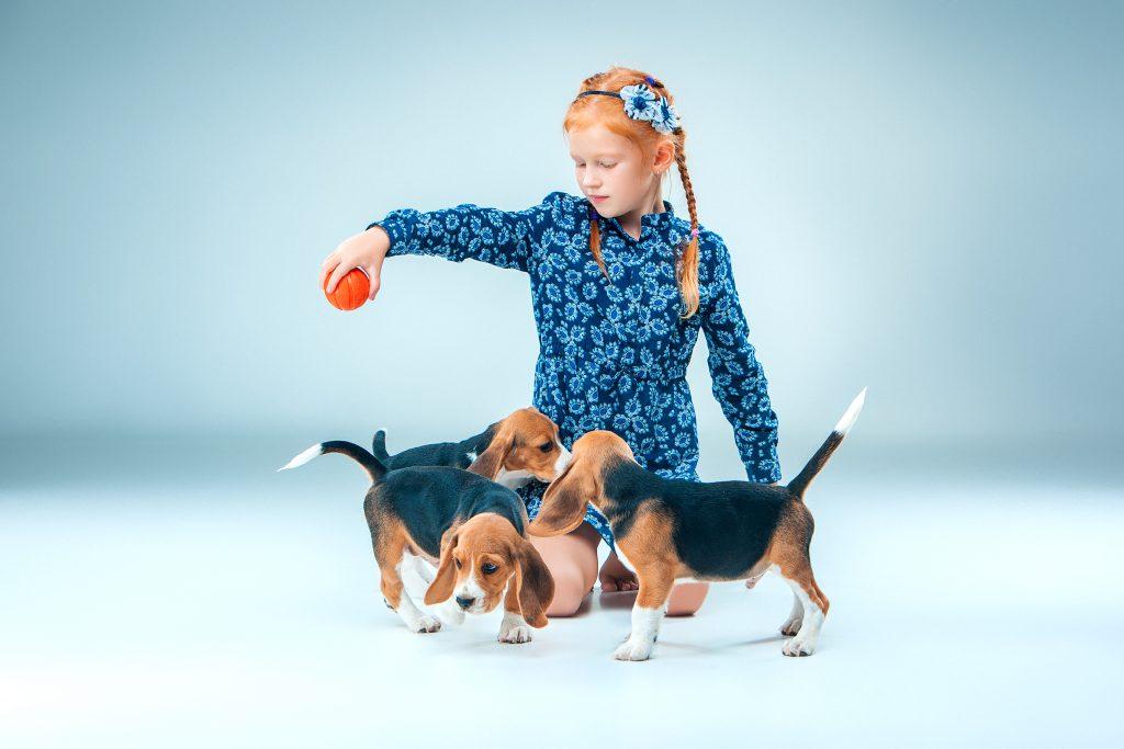 cómo socializar a un perro cachorro