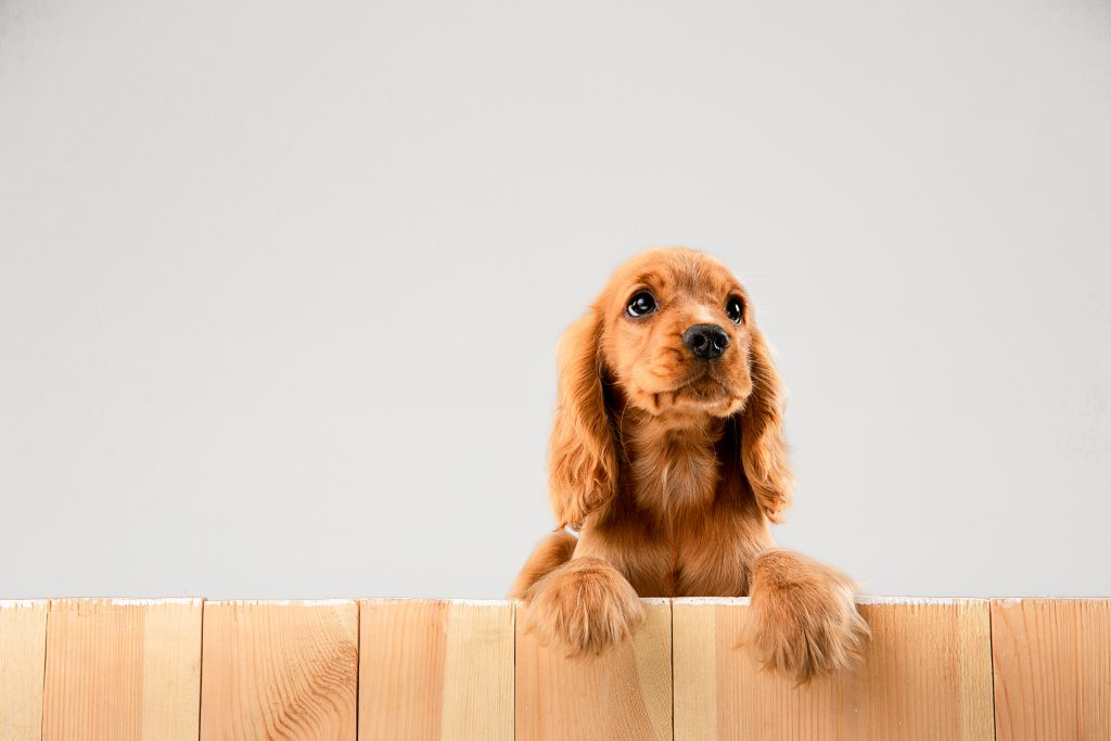cómo socializar a un perro con otros animales