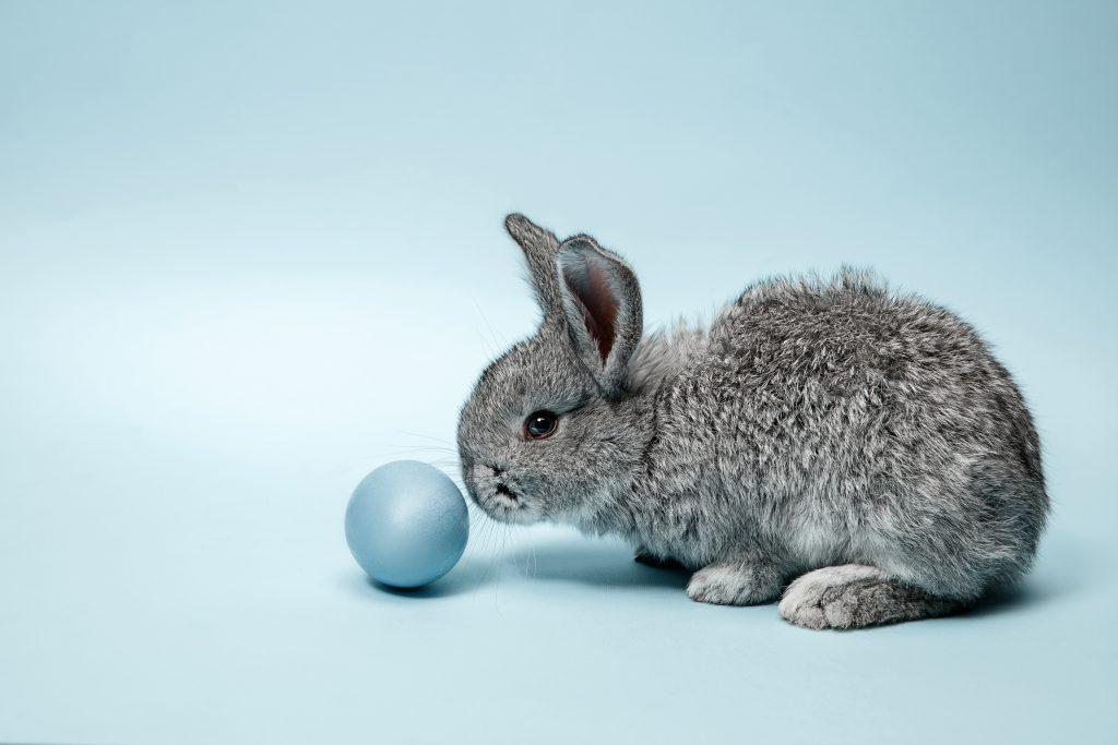 consejos al esterilizar a un conejo