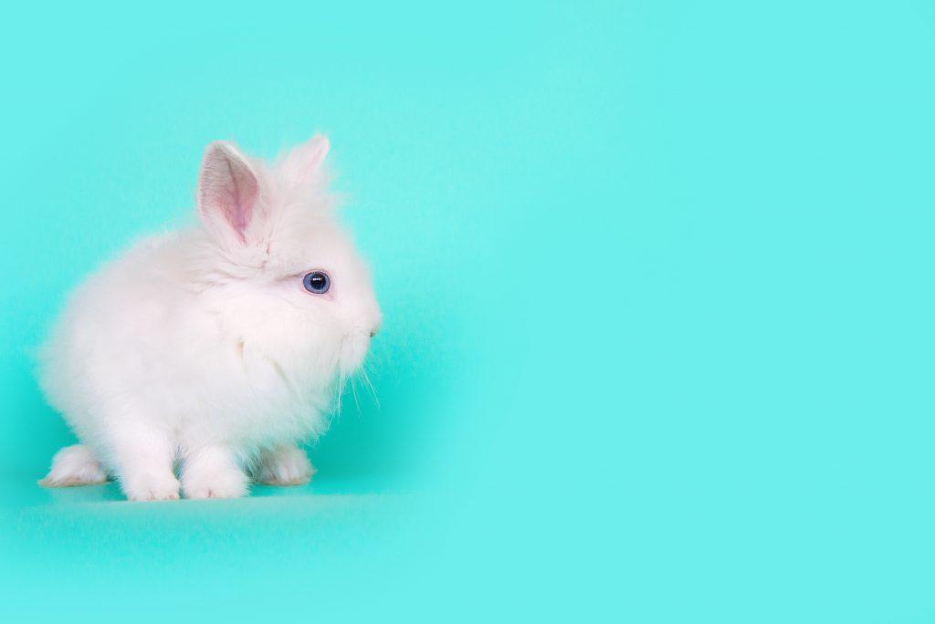 cuidados tras esterilizar a un conejo