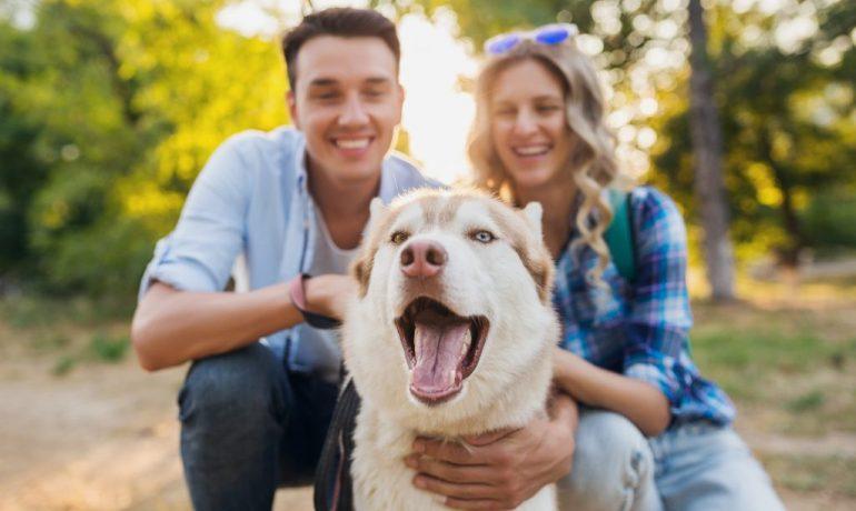 custodia compartida de las mascotas