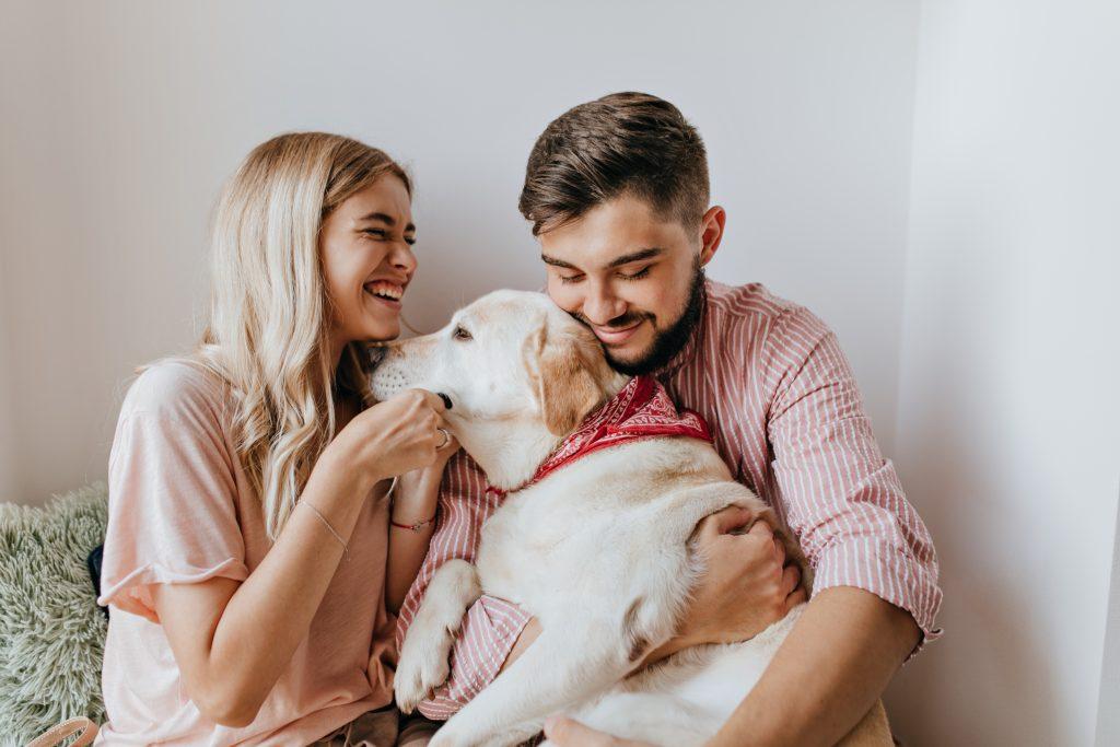 custodia compartida de las mascotas en caso de divorcio