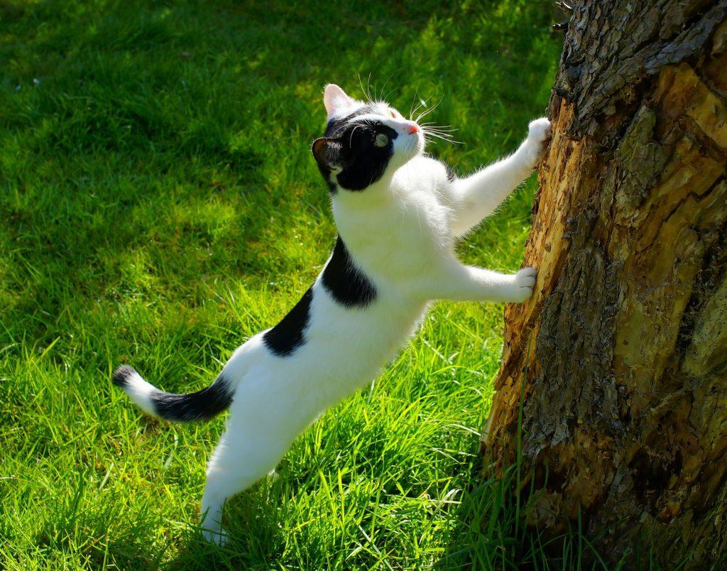 el puntero láser para gatos es bueno o malo para ellos