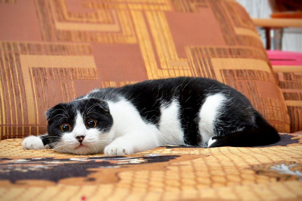 el puntero láser para gatos tiene sus inconvenientes