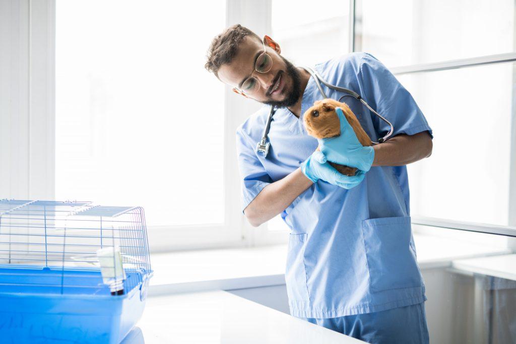 es mejor acudir al veterinario para saber por qué mi cuyo chilla mucho