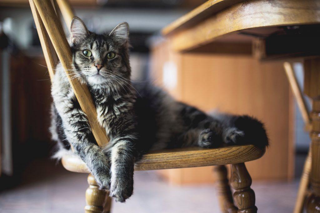estimular sus sentidos forma parte del enriquecimiento ambiental para gatos