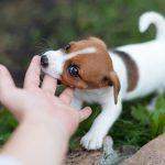 Inhibición de la mordida en cachorros