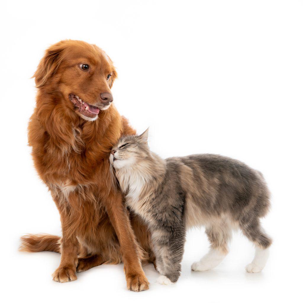 las mascotas son familia