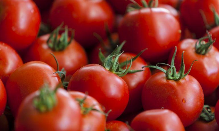 los perros pueden comer tomate o no