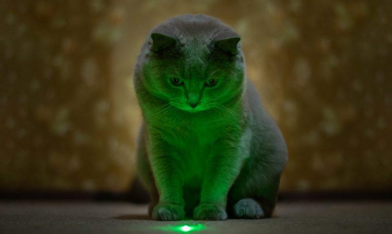 puntero láser para gatos