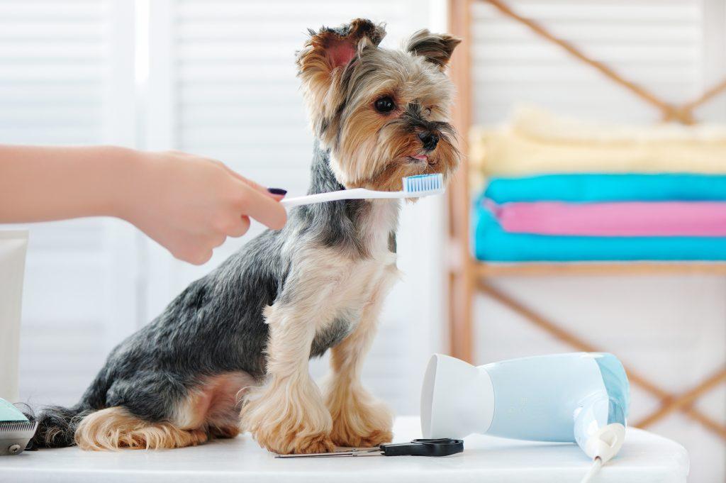tips para hacer pasta dental casera para perros