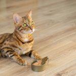 alimentos con taurina para gatos