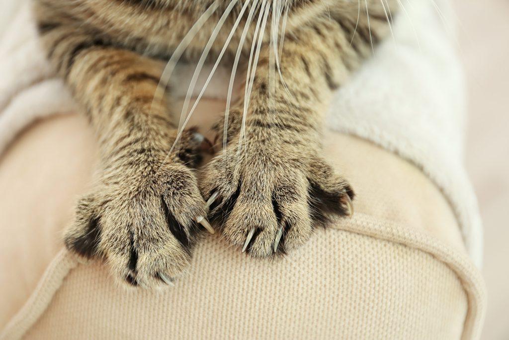arañar es uno de los instintos de los gatos