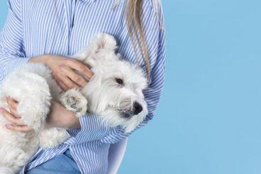 cálculos renales en perros
