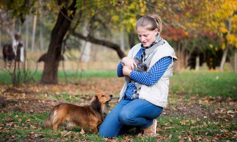 convivencia entre conejos y perros