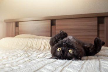 dónde duerme el gato