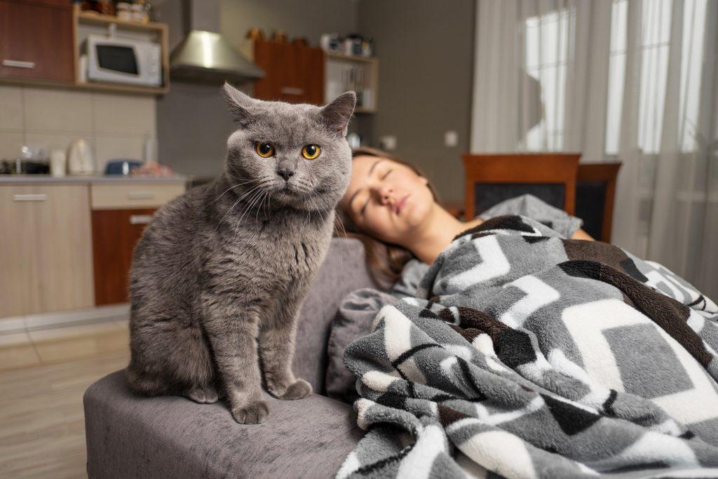 dónde duerme el gato suele ser elección suya
