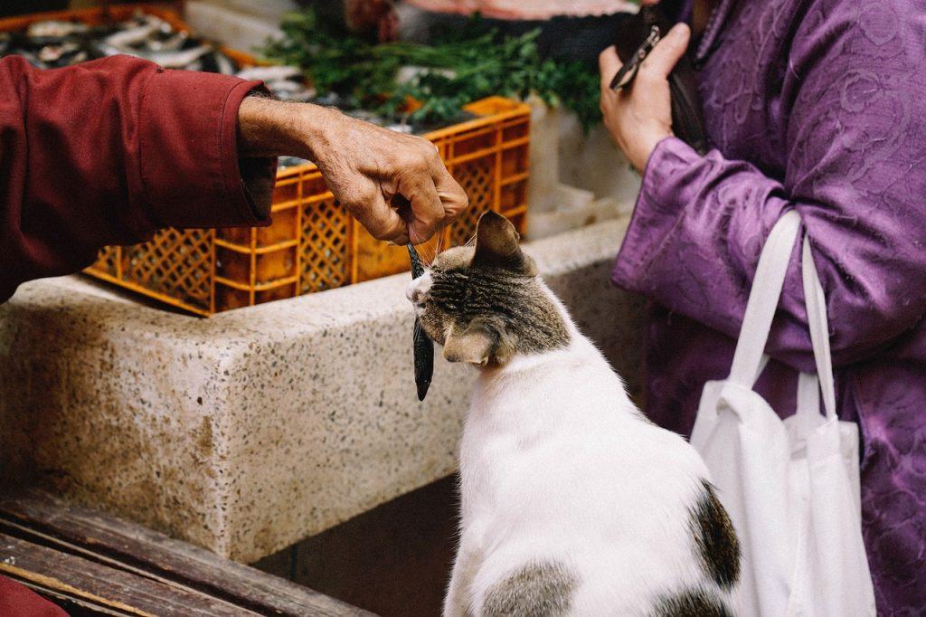 el pescado es uno de los mitos sobre la alimentación en gatos