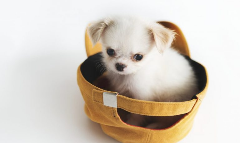 estrés en cachorros