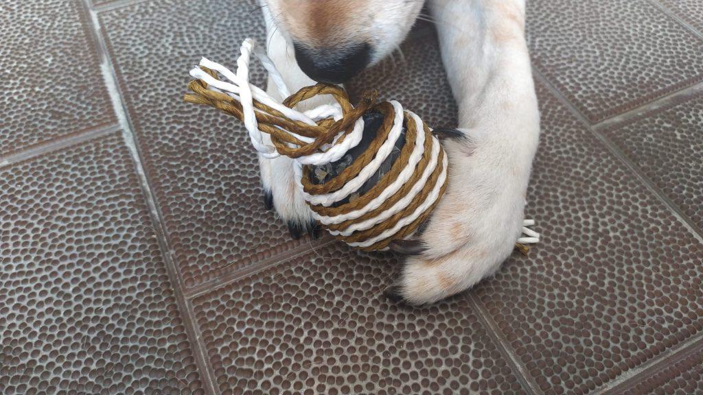 Kiba y su juguete Pamipe