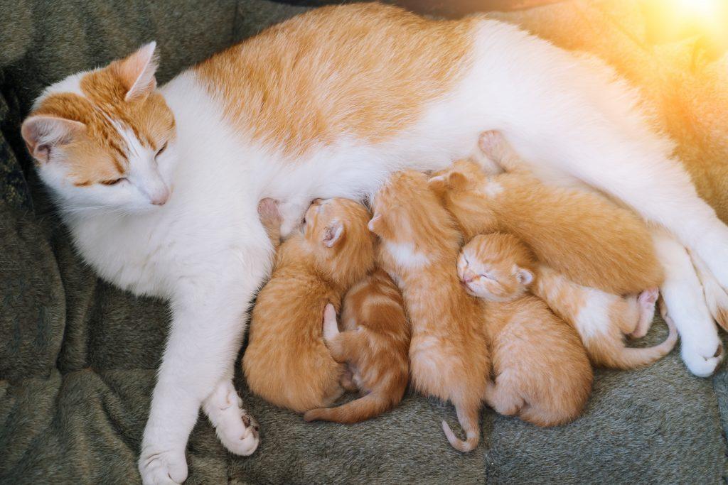 la leche para gatos es buena si es materna