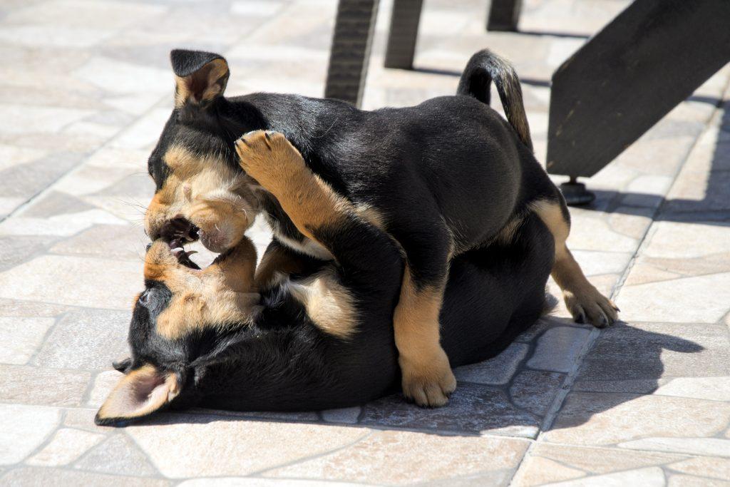 no socializar puede causar estrés en cachorros