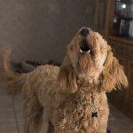 por qué ladran los perros