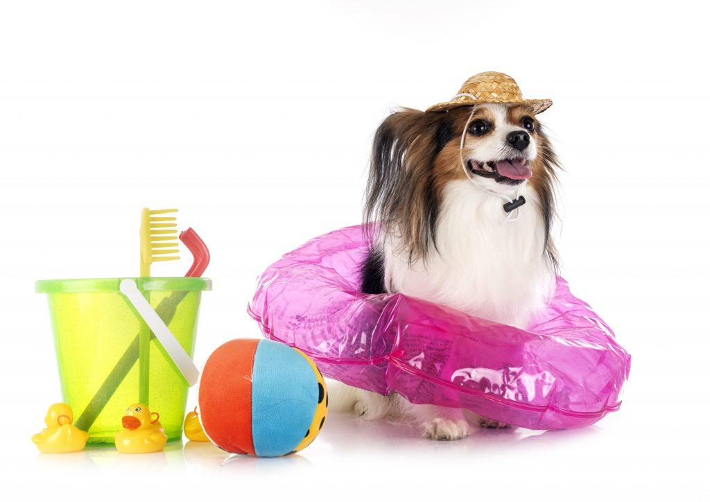 protege a tu perro del sol en la piscina