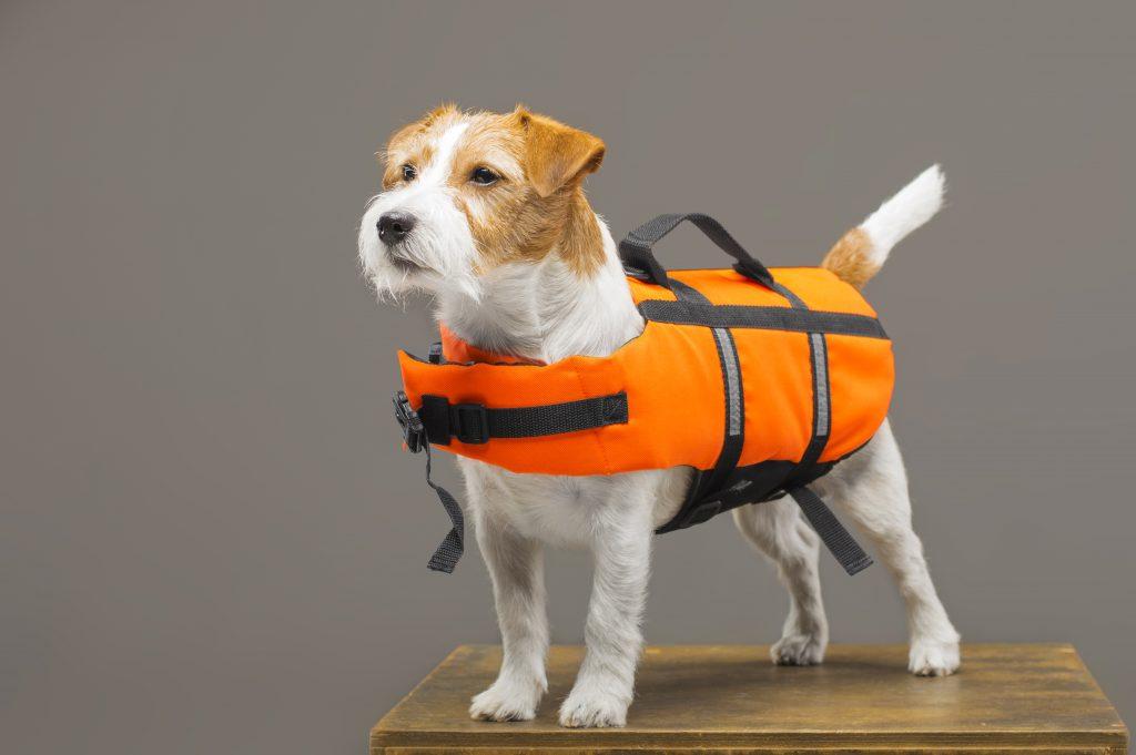 puedes ponerle un chaleco salvavida a tu perro en la piscina
