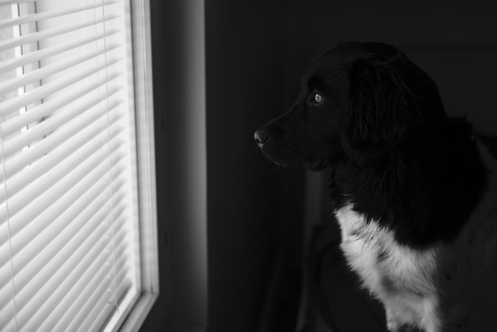qué hacer si el perro del vecino ladra constantemente