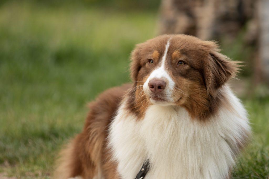 qué son los cálculos renales en perros
