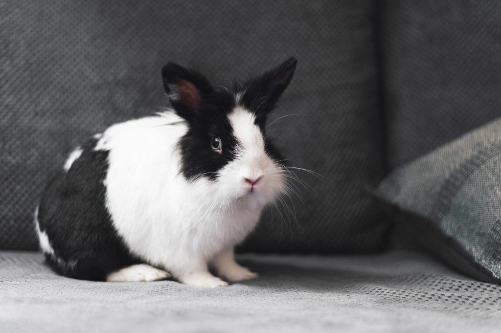 tener conejos y perros en casa es posible