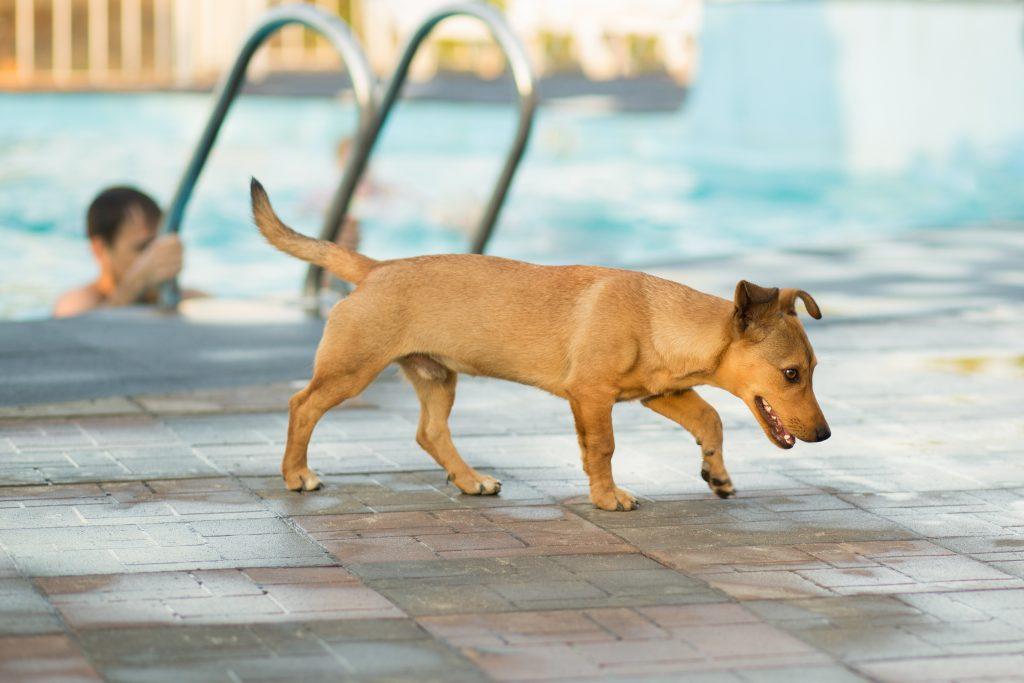 un perro puede ir a la piscina si se tiene cuidado