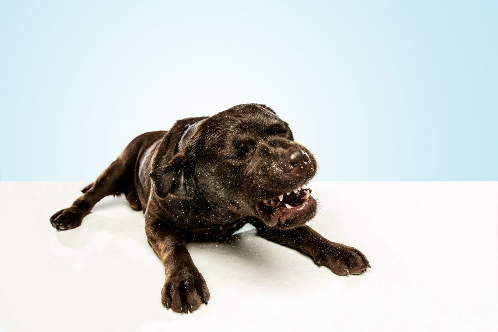 causas del estornudo inverso en perros