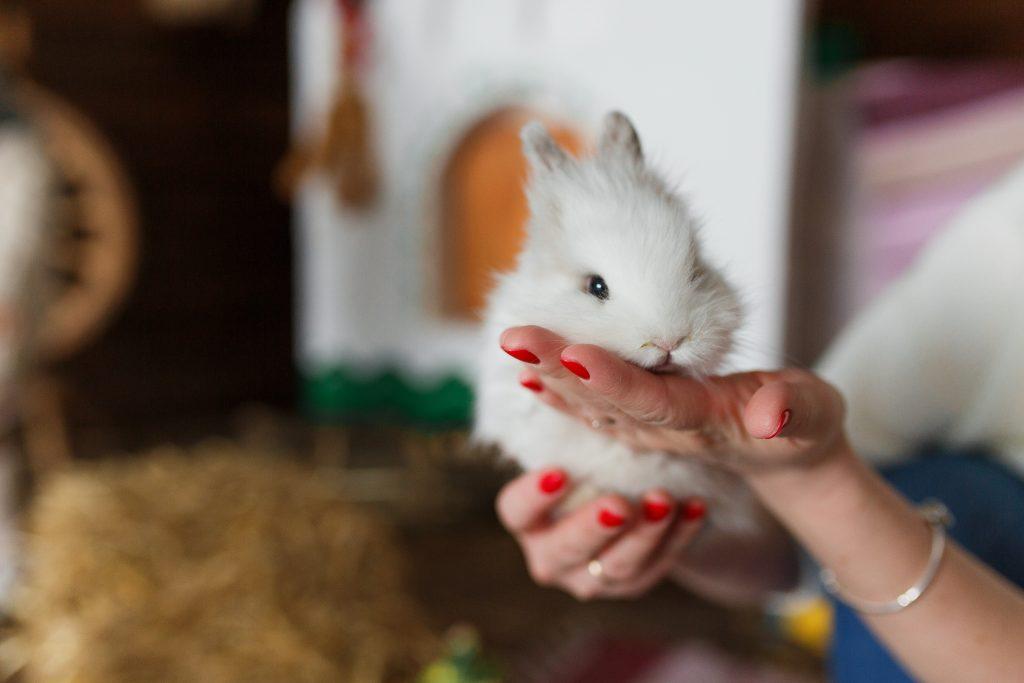 coger al conejo en brazos con mucha frecuencia es uno de los errores al cuidar conejos