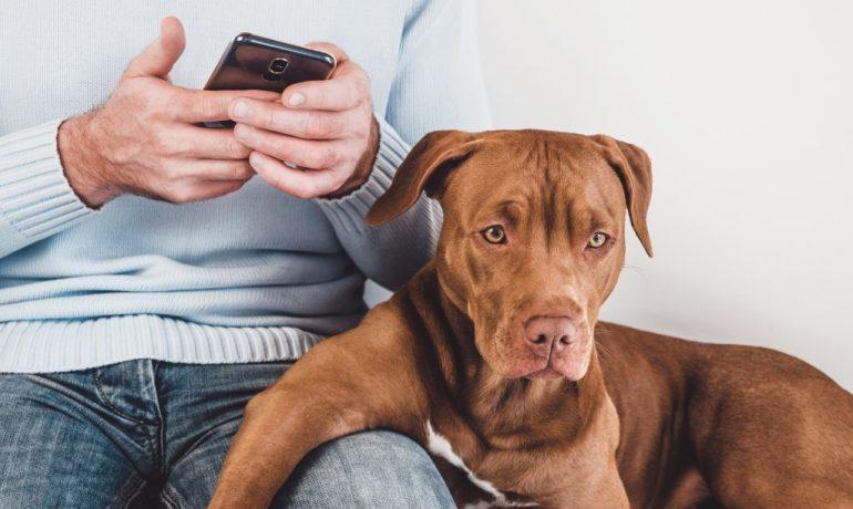 cómo demuestra un perro su amor