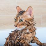 cómo refrescar a un gato en verano