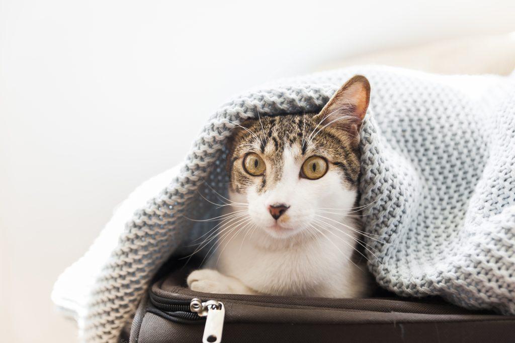 consejos para el gato en vacaciones
