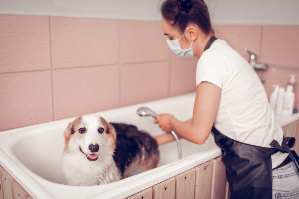 consejos para saber cómo bañar a un perro