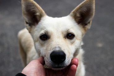 Cosas que haces y que podrían estar acortando la vida de tu perro